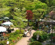 多摩川のほとりに広がる庭園 (澤乃井園のウェブサイトより)
