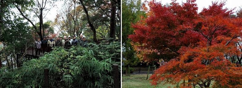 雨上がりの木々は色鮮やかです