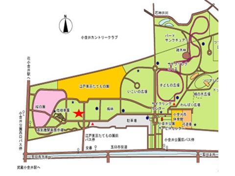 小金井公園お花見会場