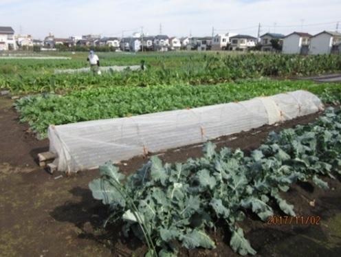 楽農会の畑